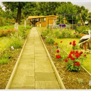 Mein Garten im Traum...