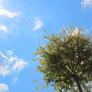 Eine Weide in der Sonne