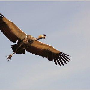 Flugschau im Weltvogelpark Walsrode
