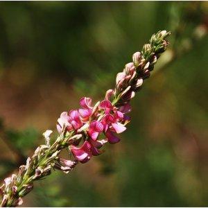bunter Blütenreigen