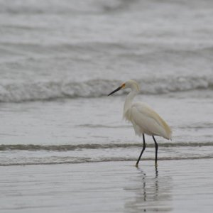 Pelikane und andere California-Tiere