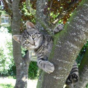 Katzenbaum I