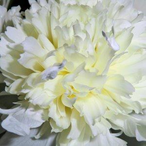 Ein paar Blumenfotografien