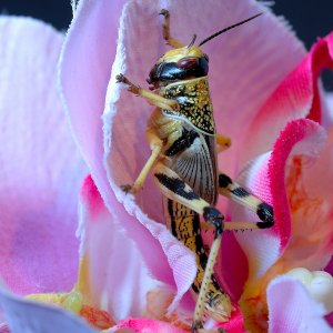 Grashopper im Styrocube