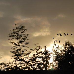 Tauben im Sonnenuntergang