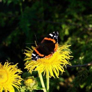 aus meinem Garten