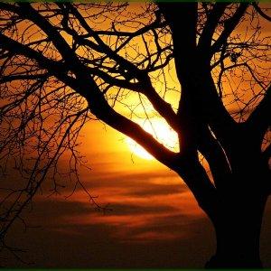 Abend Sonne !