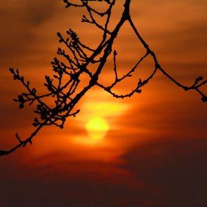 Ast in der Abendsonne