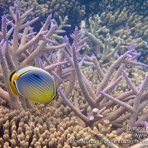 Embudu - Malediven