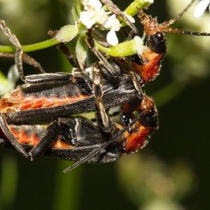Insekten-Makros