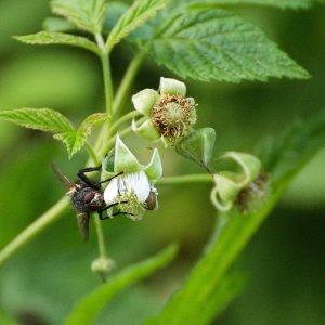 Insekten Makros die 2