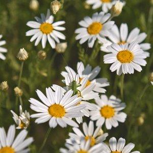 Wiesenblumen von der Blumenwiese