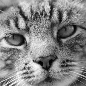 Katze Schwarz/Weiß