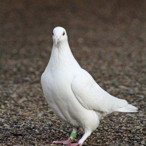 Vogel- Bild