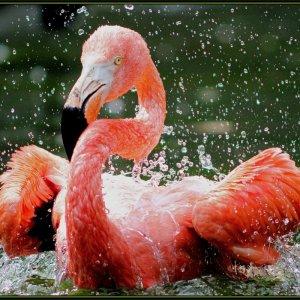 Flamingos mit Spaß dabei ....
