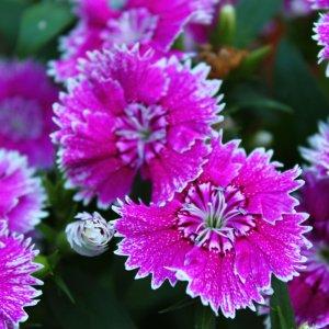 Mal Blumen