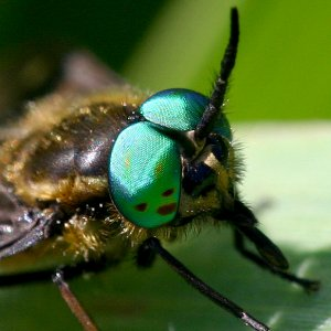 Irgendein Insekt