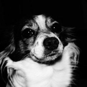 Bella aus dem Dunkel