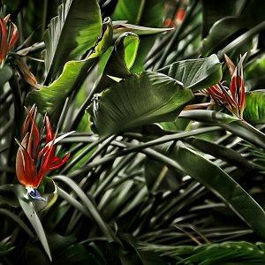 Kölner Flora