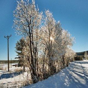Die Farben des Winters II
