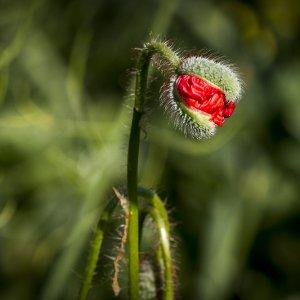 Pflanzen & Natur