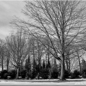 Cemetery Winter 2013