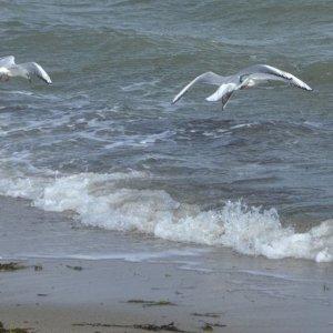 Strande