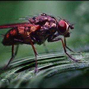 Noch 'ne Fliege ...