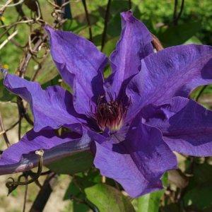 Sommer und seine Blüten