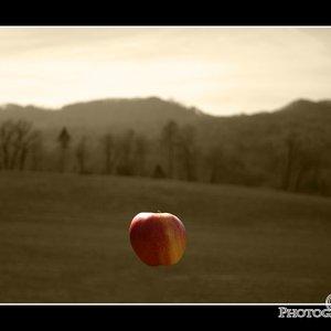 Adams-Apfel-II-