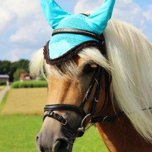 Pferde im Portrait