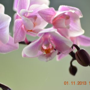 Orchidee am Fenster