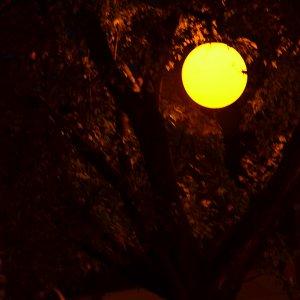 Laterne im Baum