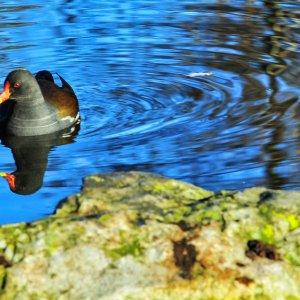 Tiere im Wasser