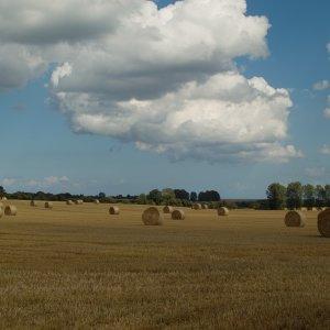 Sommer - Feld